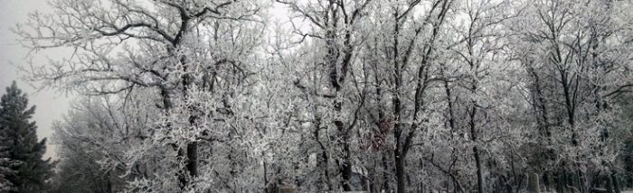 Trees covered in frost Minnesota
