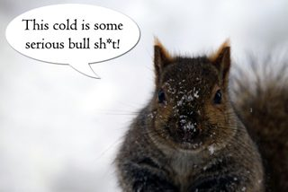Going ice fishing when its twenty degrees below zero in northern MN, feeding corn to the squirrels and finding ways to stay warm in a frozen tundra.
