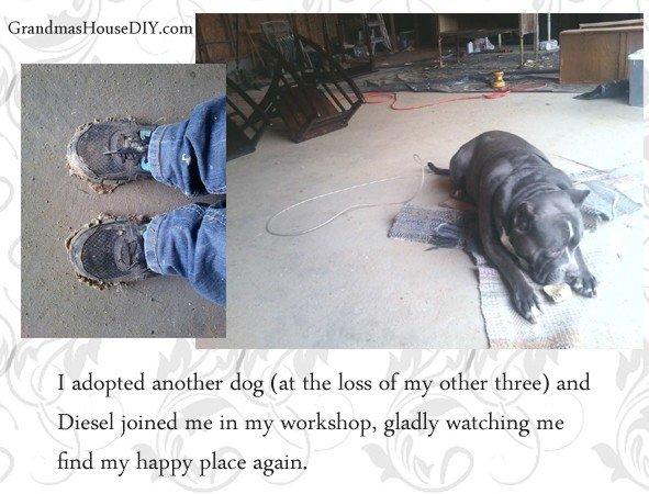 adopted dog diesel