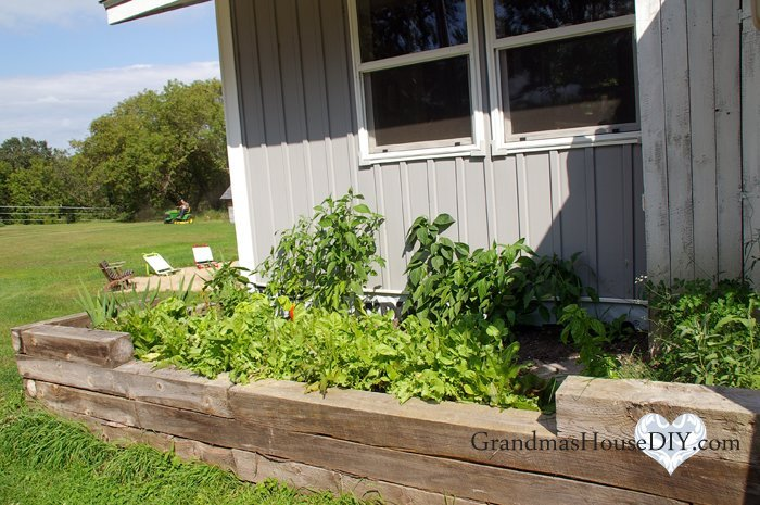 Kitchen garden planning, the good, the bad and what I learned this year, perennials, bell pepper, herbs, north side of the house and shade plants