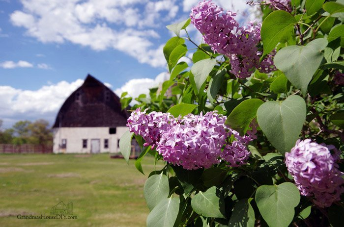 Memorial day weekend at Grandma's House DIY, old barn watching a storm come in, blooming lilacs, farm spring photo gallery 2017