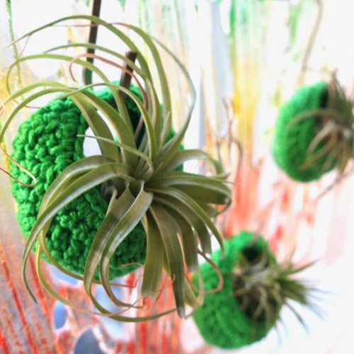 Air Plant Pods – Green your Decor!
