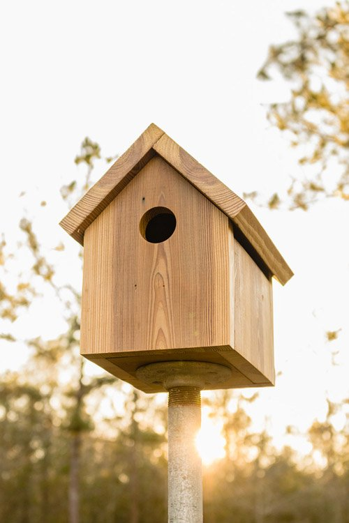 Kippi from Kippi at home - How to Build a Birdhouse
