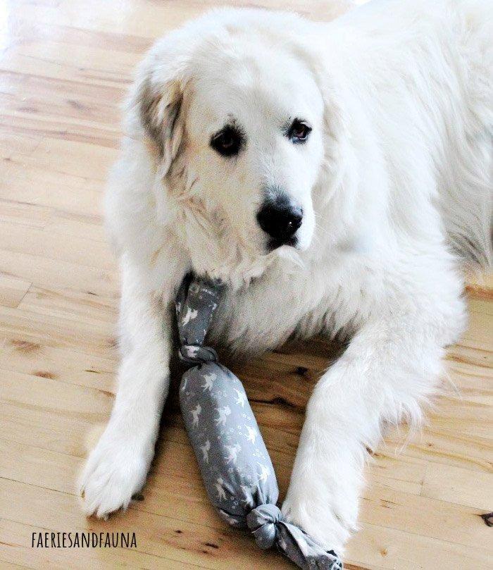 DIY Dog Toys for Cheap Leanna at FaeriesandFauna
