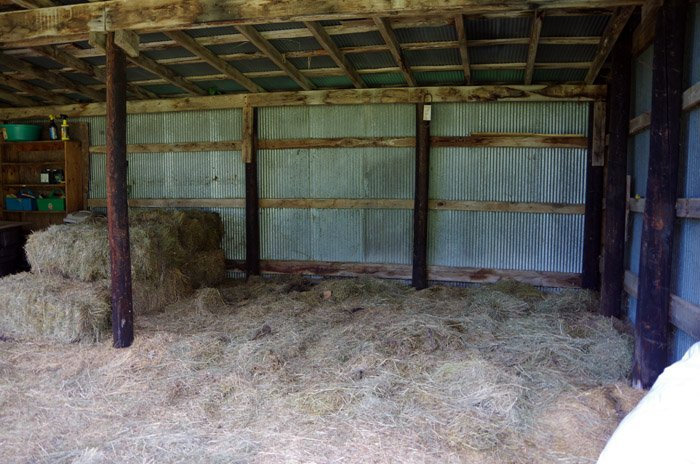 Updating my Horse Shed - The Dog Days of Summer Winding Down. Adding a wall of plywood, shelves and hay storage for my horse shed along with a solar light!