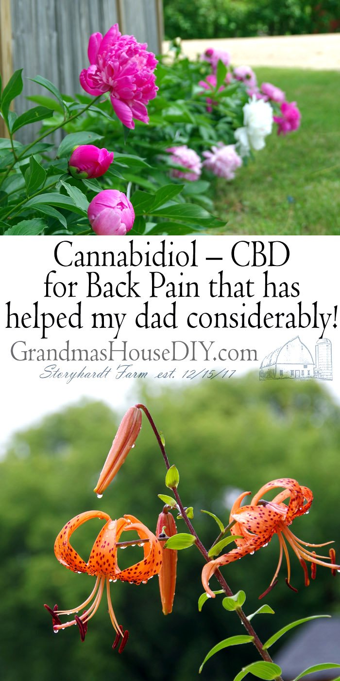 In this article, we will try to learn and understand more about back pain, the different causes, the current treatments to relieve it and lastly – the benefit of CBD oil for pain and the best way to use it. CBD uses for pain, back pain, shoulder pain, neck pain