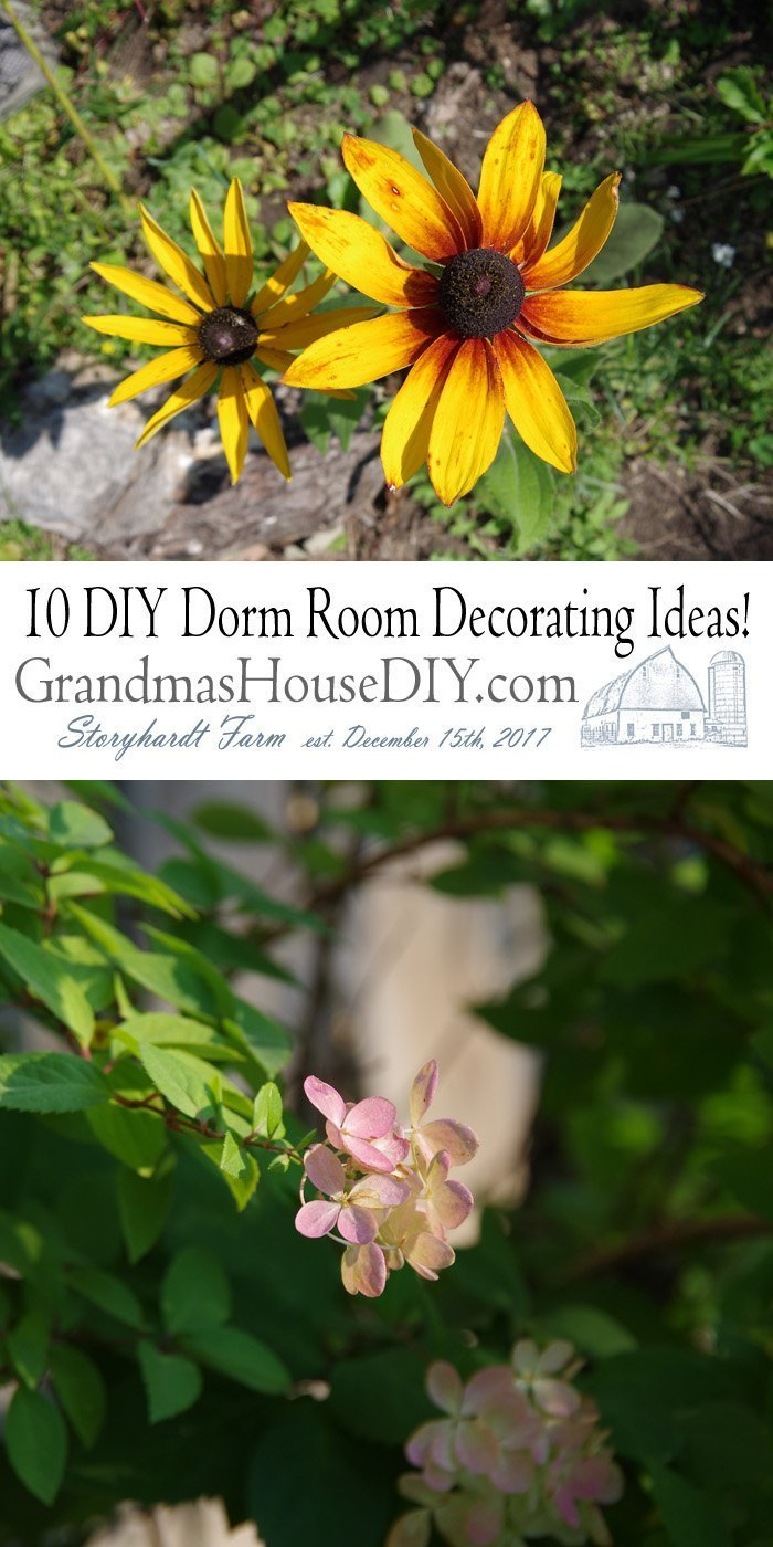 Decorating dorm room on a budget is limiting. Don't stress, because we've rounded up plenty of cheap DIY ideas that'll make a tiny space a functional home