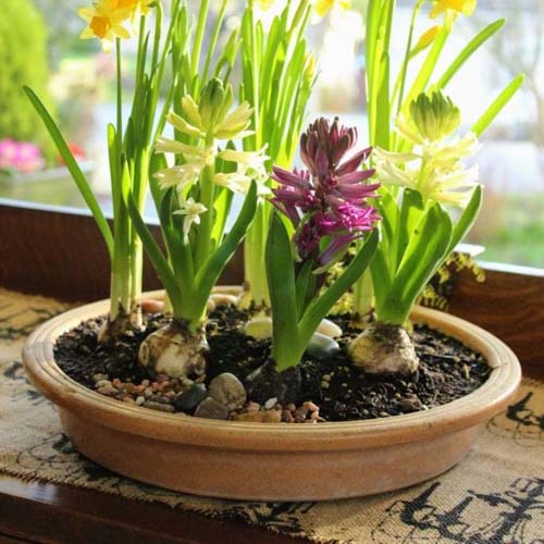 A Saucer Filled With Spring